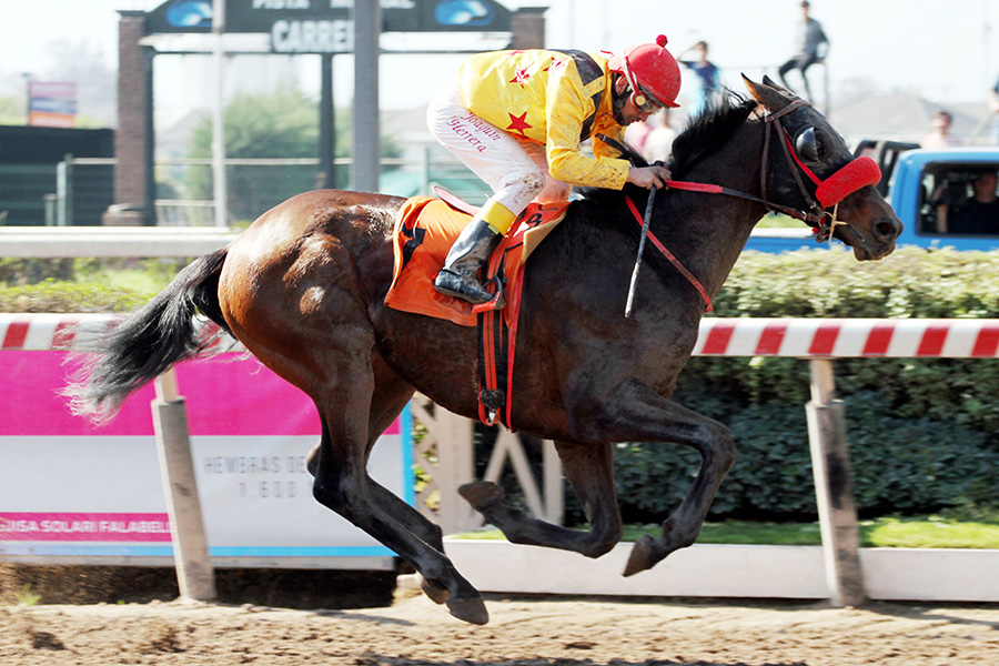 Dirty Gold: Winner of El Solano Handicap, March 2019, Chile