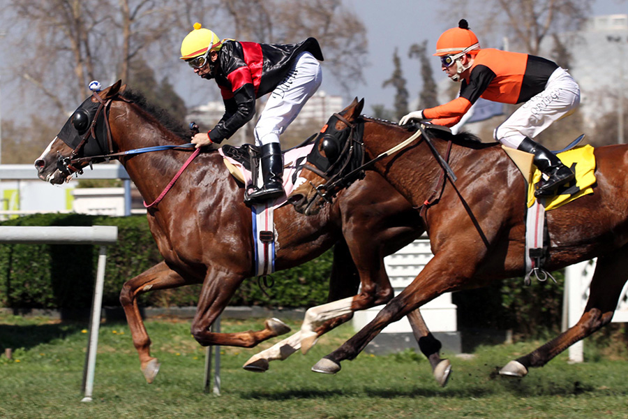 Noble Pensamiento: 2nd in Hipodromo De San Isidro Handicap March 10, 2019 Chile field of 12 – 6 furlongs (1200 meters ) in 108.05