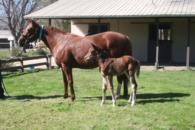 Chestnut filly, dam: Circle The World by Munnings