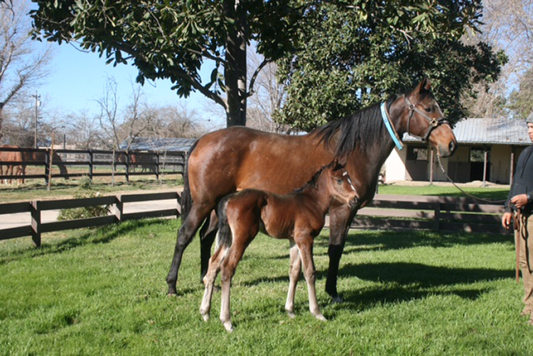Bay colt, dam: Malibu Angel by Malibu Moon